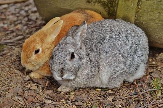 Unwell Rabbit